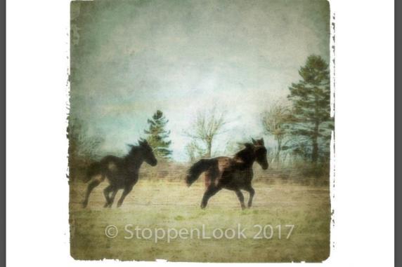 Wild Spirits, North Wiltshire, PEI