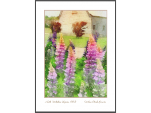 'North Wiltshire Lupins'
